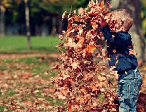 Underbar start på hösten. 3 månader till julafton…