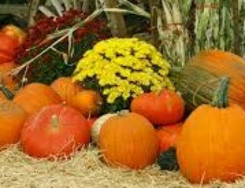 Oktober i sin prakt.